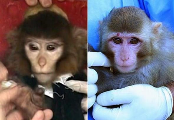Persian monkeys
